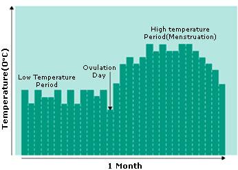 BBT during ovulation